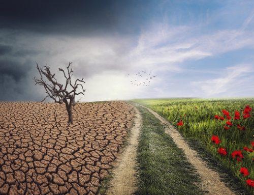 Konsekvenser av klimatförändringarna